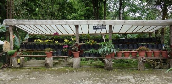 Gardening, A Relaxing Homestay, Ravangla, Discover North East India, OurGuest