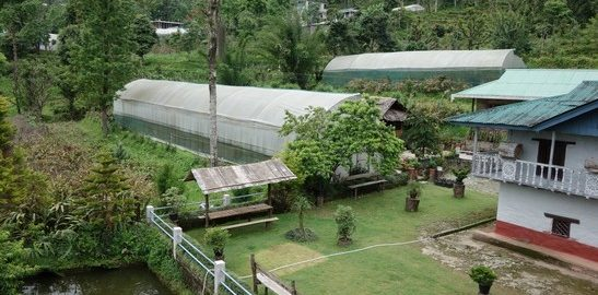 Greenhouse, A Relaxing Homestay, Ravangla, Ecotourism in North East and Sikkim, OurGuest