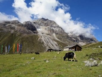 Yumthang North Sikkim Tour