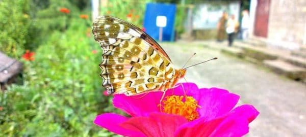 OurGuest Malla Kothi, Mangan, sikkim nature experience, OurGuest