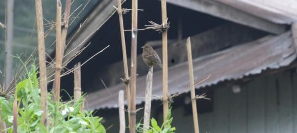 OurGuest Malla Kothi, Mangan, sikkim bird watching, OurGuest